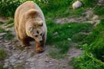 Teddy bear by Cheryona