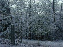 -winter- by miserydesoul