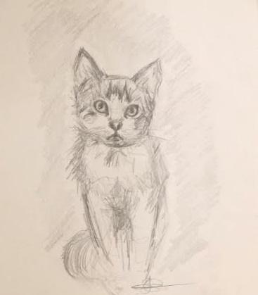 Kitten Sketch by Jenniej92