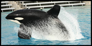 Big Whale, Big Wave