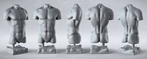 Male Anatomy Studies - Torso by PixelPirate