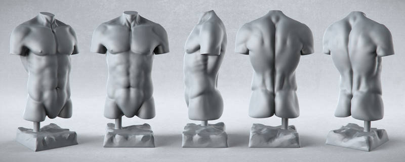 Male Anatomy Studies - Torso
