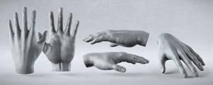 Male Anatomy Studies - Hand