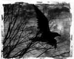 - the Raven -