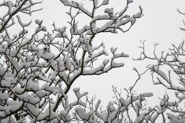 Tree's Hands