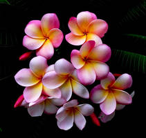 Flowers by aquamarinemel