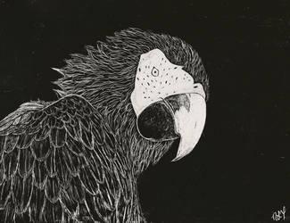 Parrot Scratch Art by xnikkisonfire