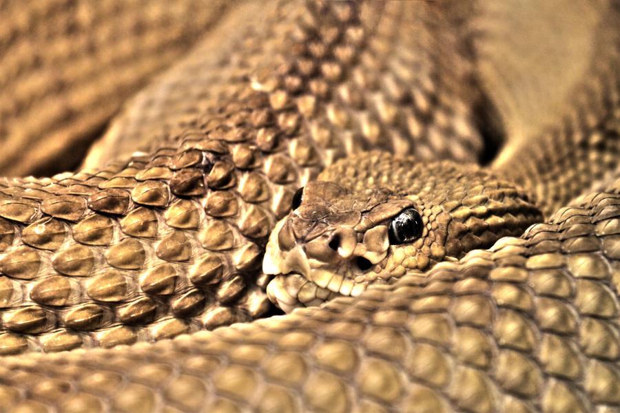 Snake IV by Kenoiya