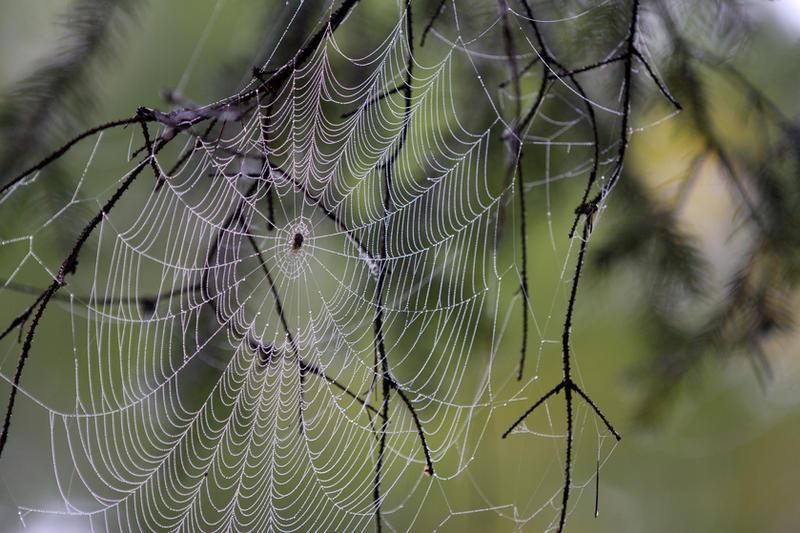 Spider III by Kenoiya