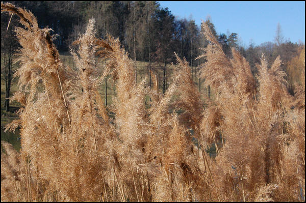 Grains_by_runemetsa.jpg