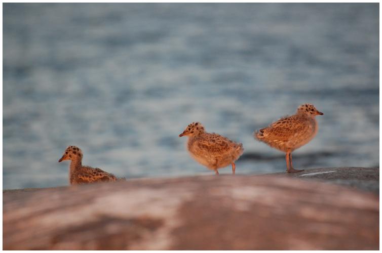 The_Ugly_Ducklings_by_runemetsa.png
