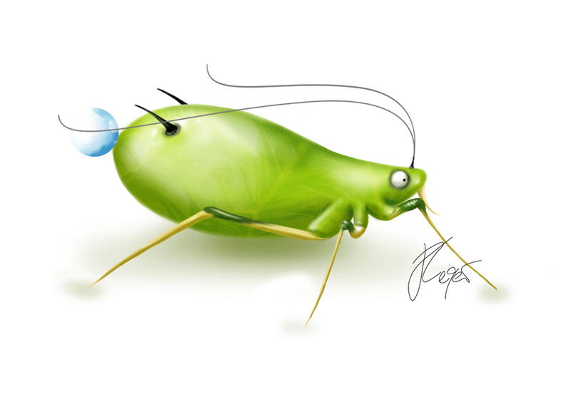 Aphid - Spirit of the ants