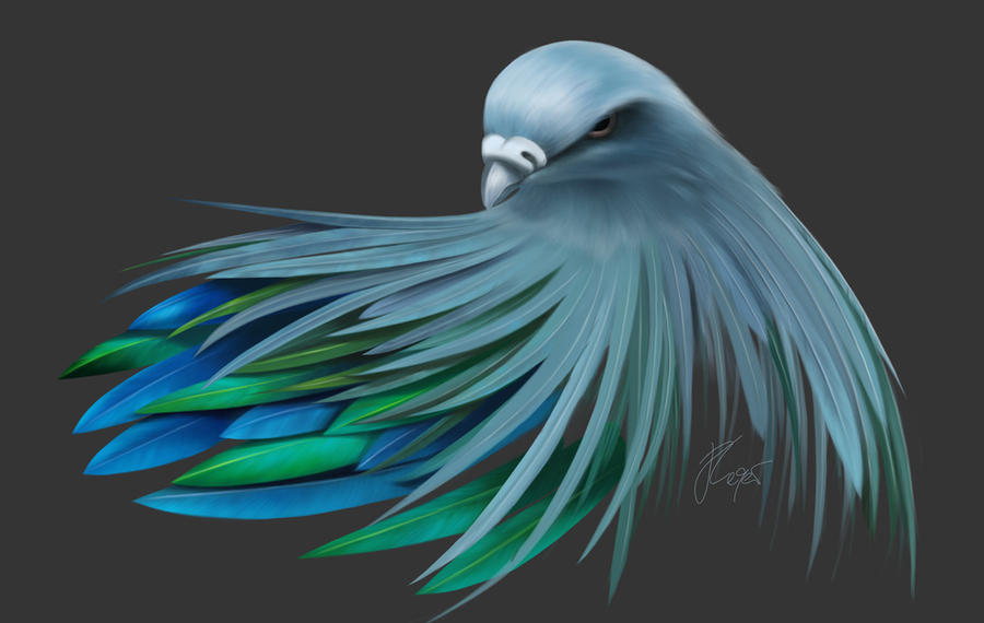 Nicobar Dove - zenginejulia | ello
