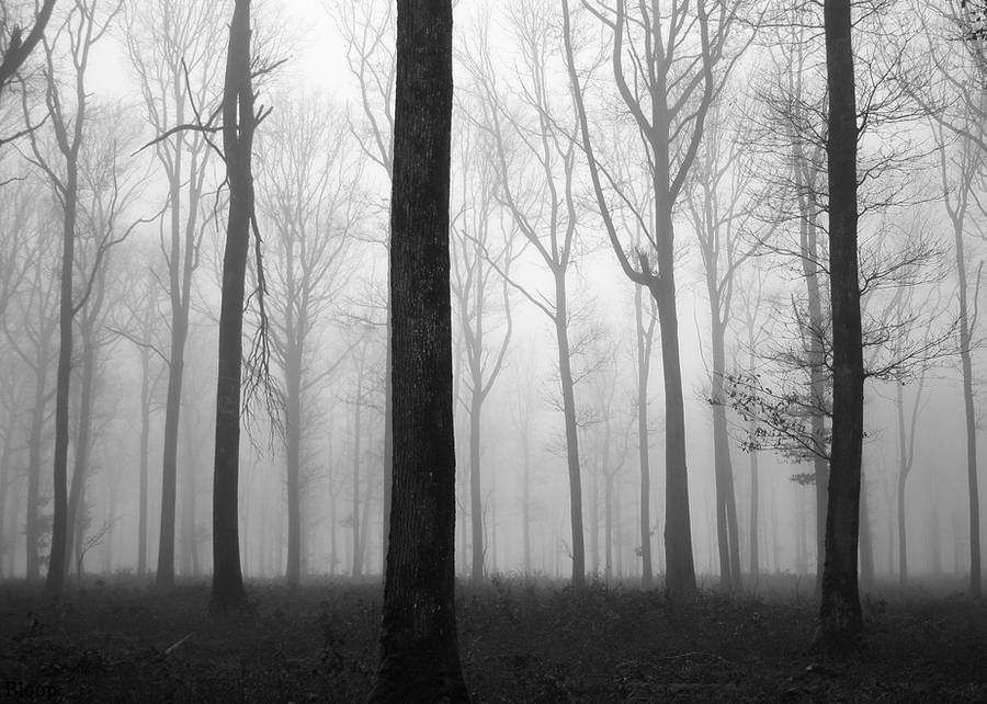 Forest 10 by Octo-pus