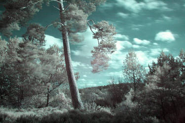 Infrared 3 by Octo-pus