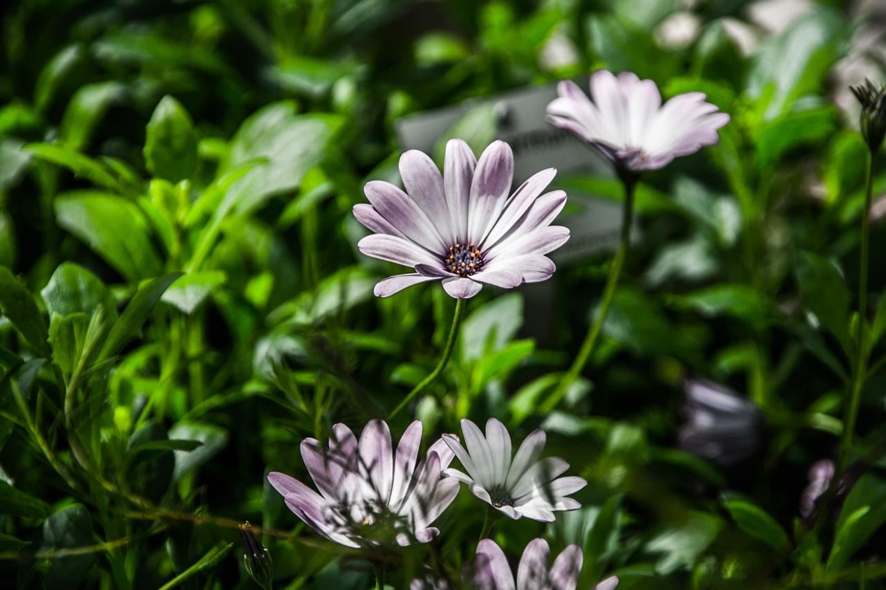 just flowers by FreSch85 on DeviantArt