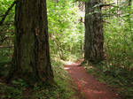 Forest Path 3
