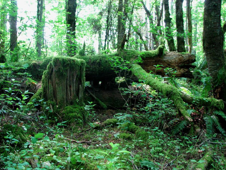 Fallen Log 3 by silent-scenes