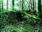 Fallen Log 3