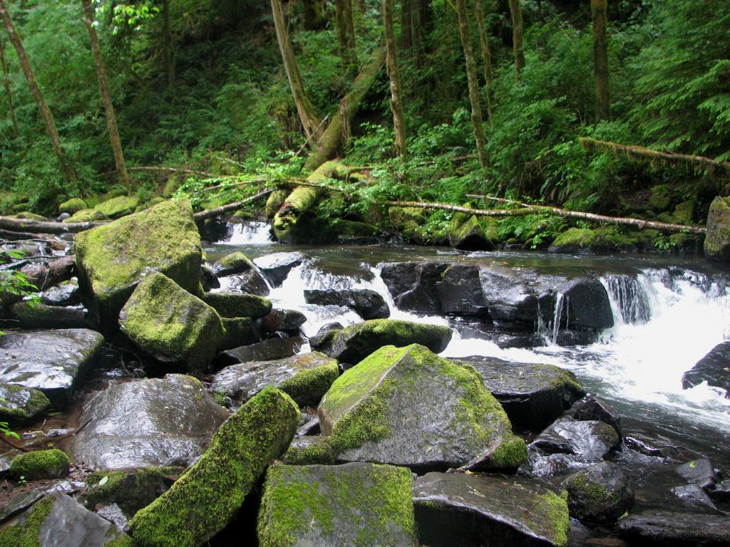 Rainforest Stream by silent-scenes