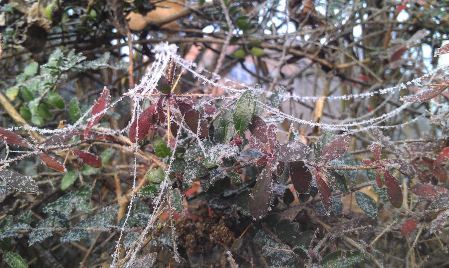 Spiderweb Frost  2 by loveleoshateyou