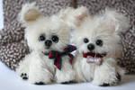 White fidget puppies Alex and Chandler