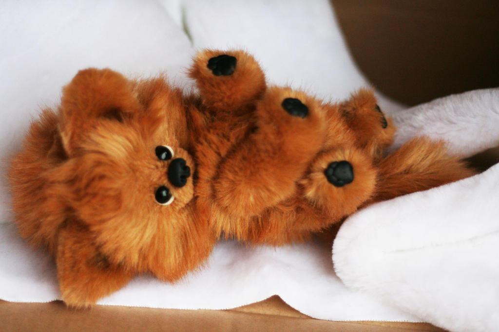Dog Pomeranian Puppy