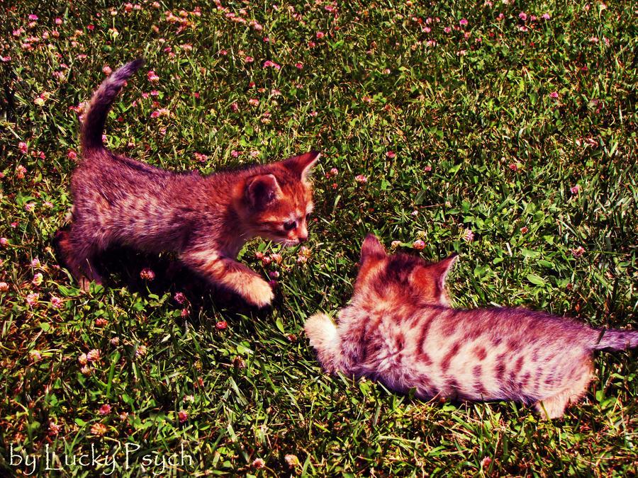 Kittens by LuckyPsych