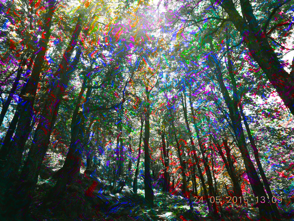 Pretty Trees Psychedelic Forest Www Imgkid Com The Image Kid Has It