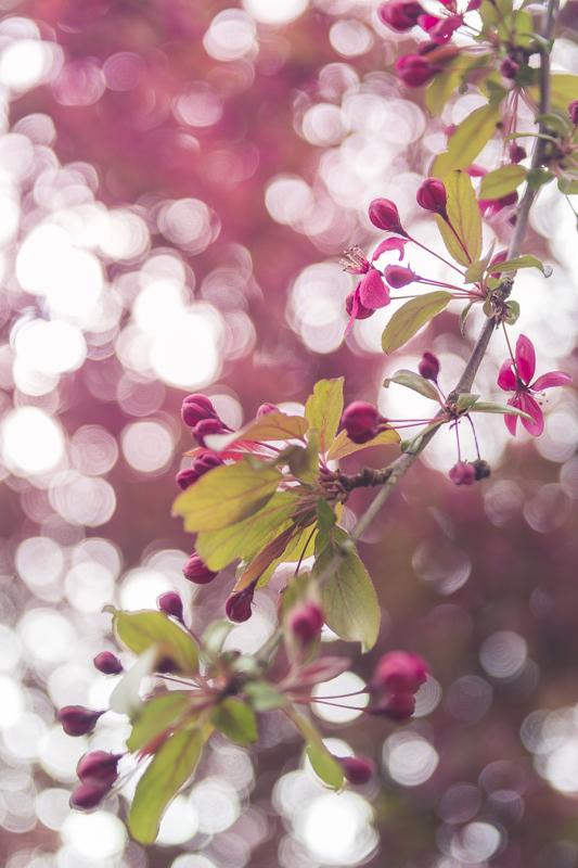 (bloomingbokehsh) by GirlsLikePonys