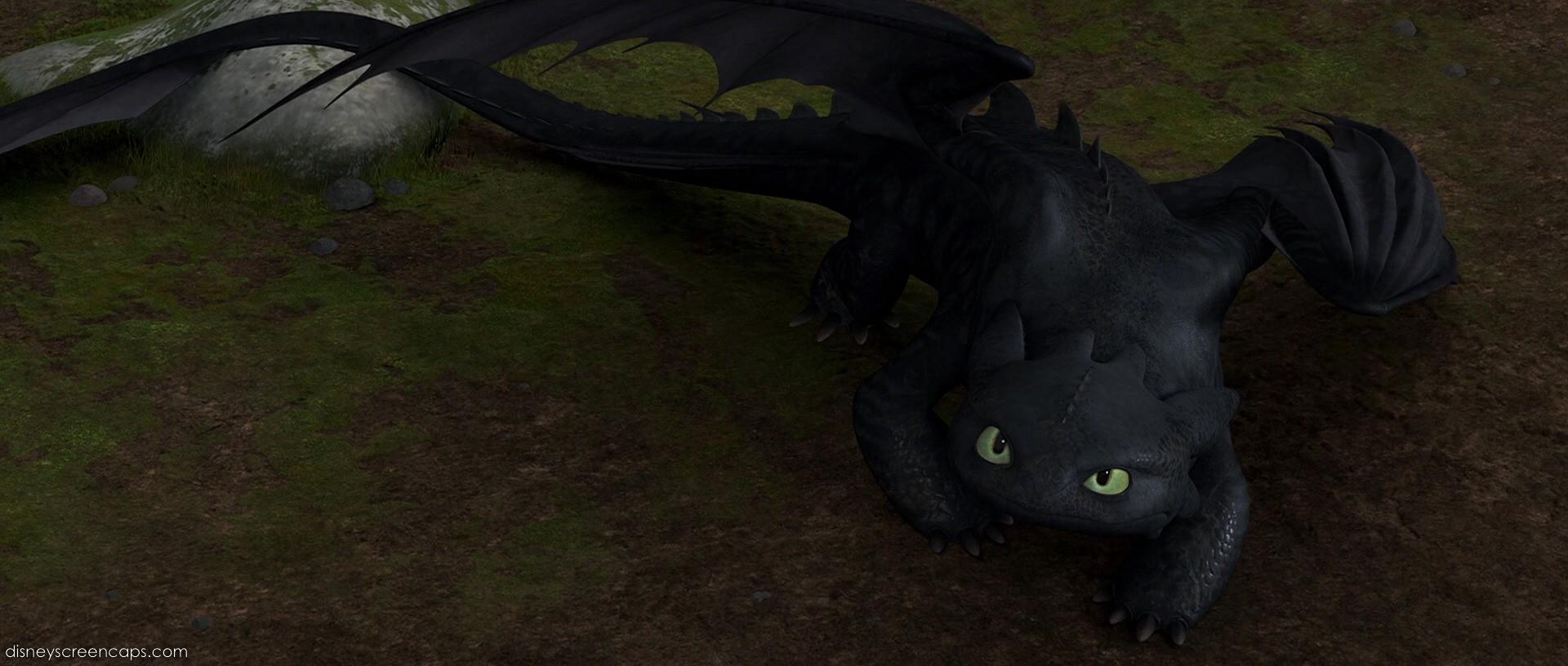 Фото драконов настоящих живых ночных фурий