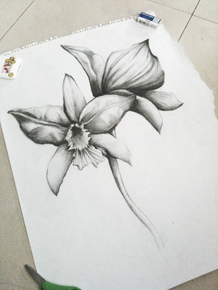 Orchid Drawing by pikopuko on DeviantArt