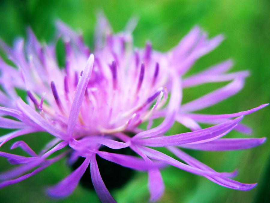 Needles of Flower by ausrejurke