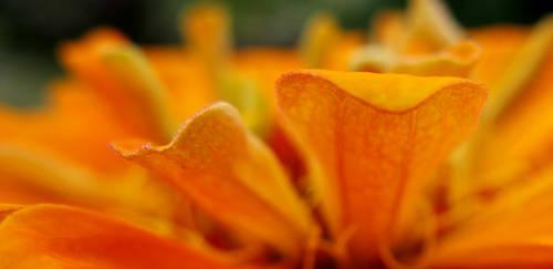 Staring at Orange