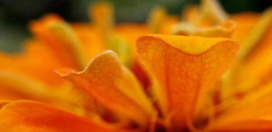 Staring at Orange by ausrejurke