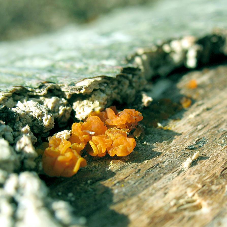 Small in Orange by ausrejurke
