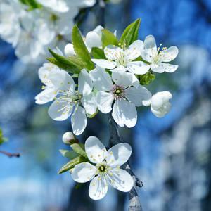 Spring Had Come