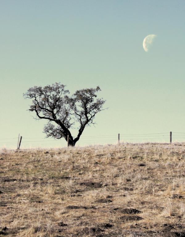 Third Quarter Moon by RyanVoss