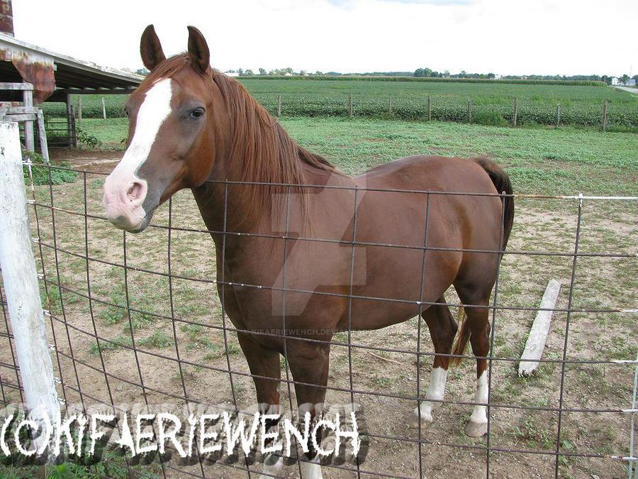 Equine Alert by kifaeriewench