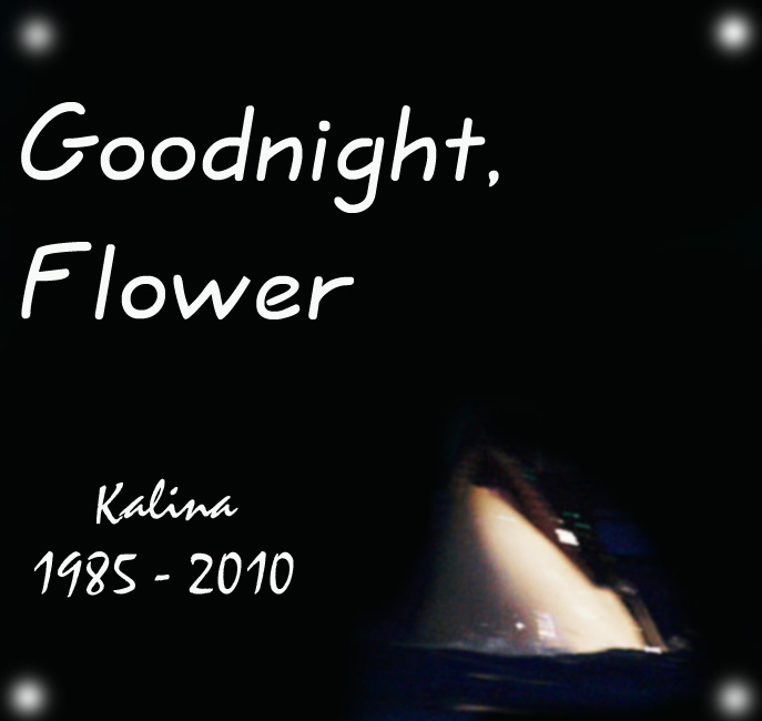 Goodnight, Flower by kifaeriewench