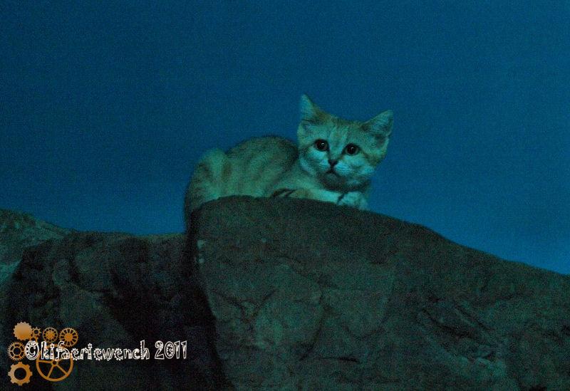 Squishy Kitty by kifaeriewench