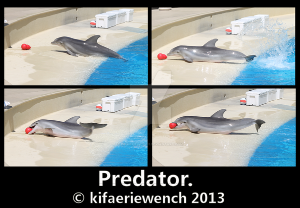 Predator by kifaeriewench