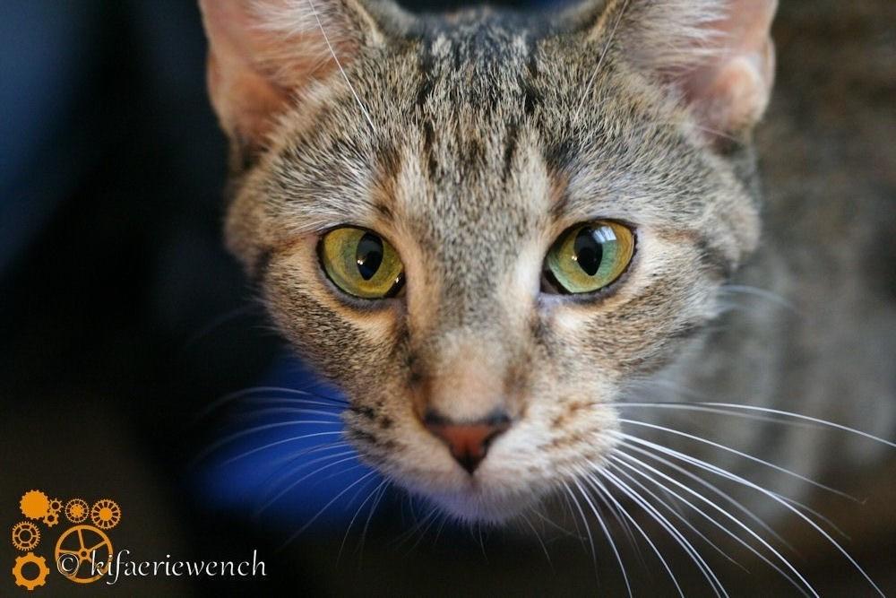 Bright Eyes by kifaeriewench