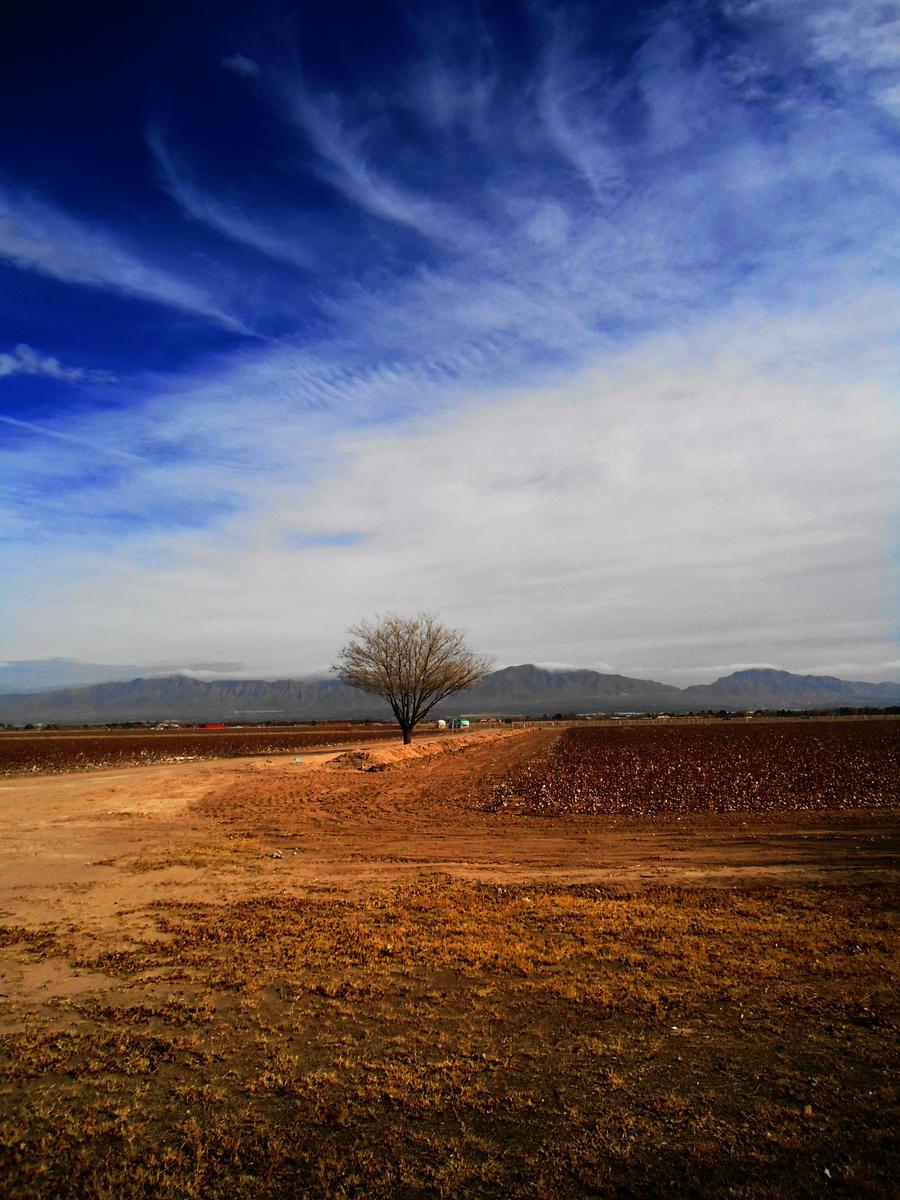 Barren Till Spring by SharPhotography