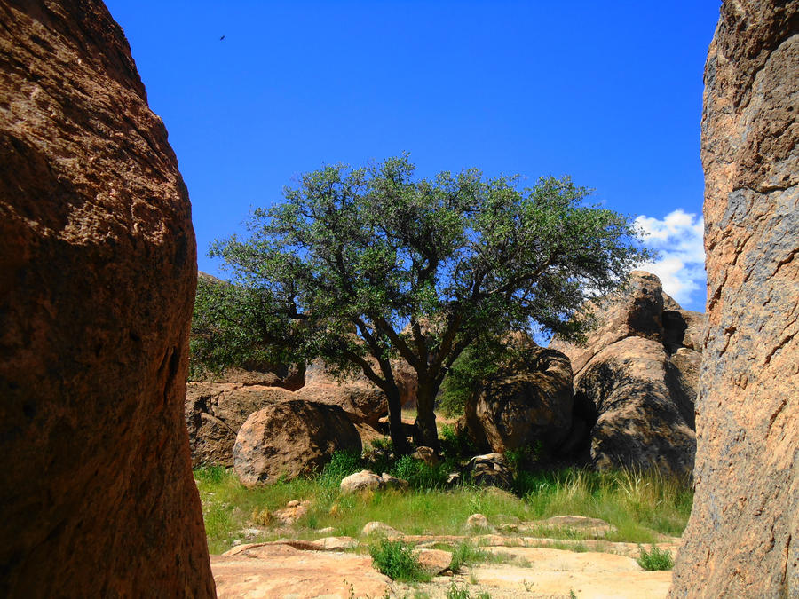 City of Rocks ,Near Silver City, N.M. by SharPhotography