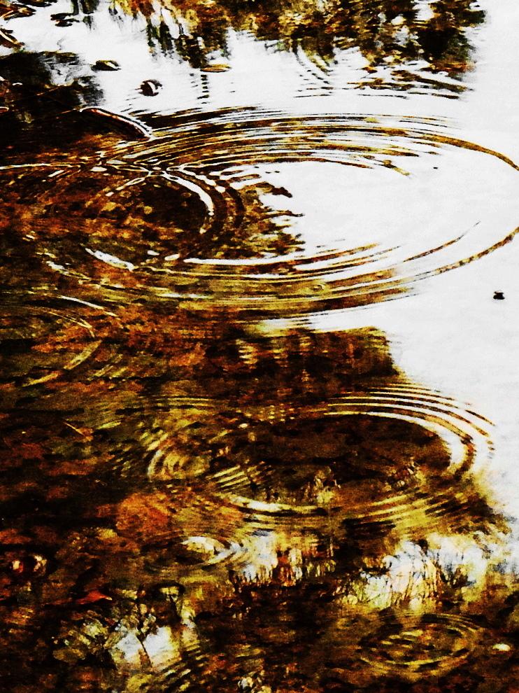 Soft Summer Rain by SharPhotography