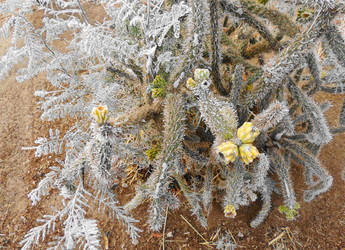 Cold Cacti by SharPhotography