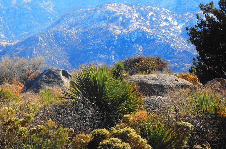 High Desert Beauty by SharPhotography