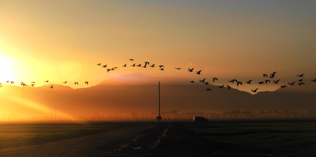 Early Morning Flight by SharPhotography