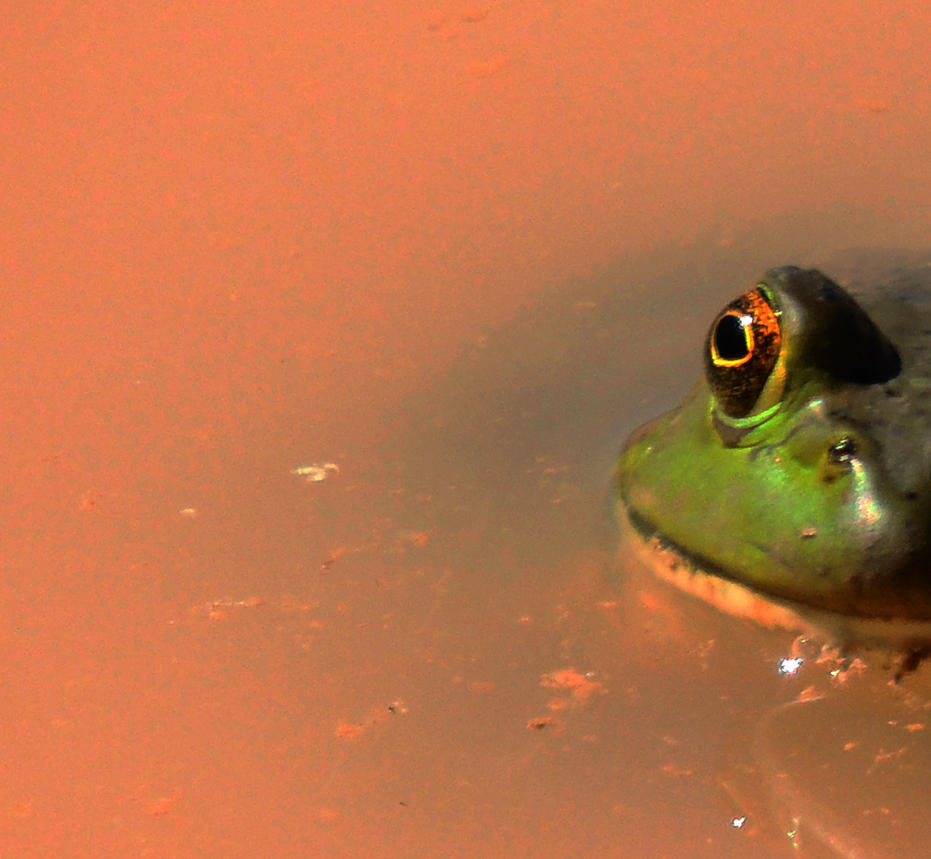 I'm So Sad, I lost My Lily Pad by SharPhotography